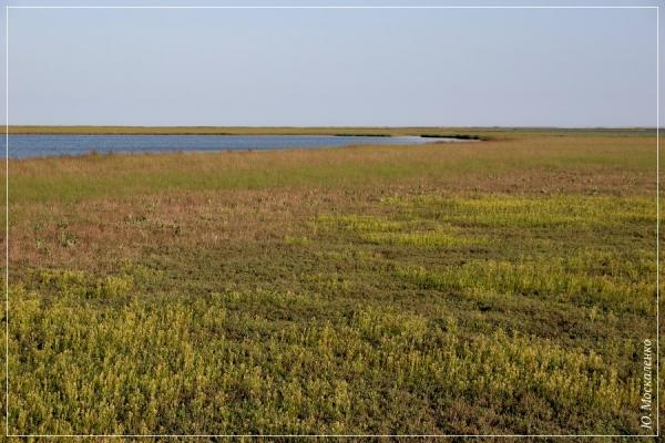 Водно-болотні угіддя півострова Ягорлицький Кут