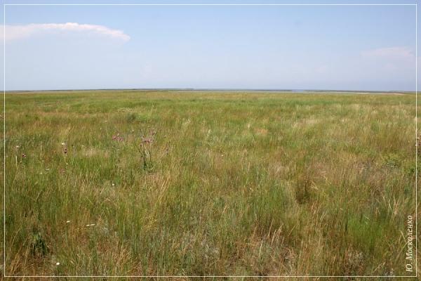 Степ півострова Ягорлицький Кут