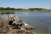 Солоноозерна ділянка. Озеро Пеньків