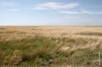 Аспект костриці в степу Потіївської ділянки