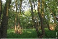 Волижин ліс